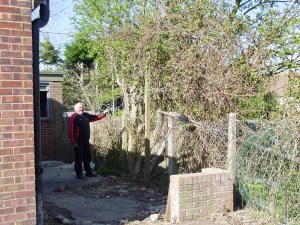 Assessing the size of buddleia