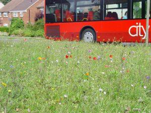 Buss passing Pinnocks meadow